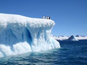 devil-island-iceberg-weddell-sea-adelie-penguins-antarctica_34421_600x450